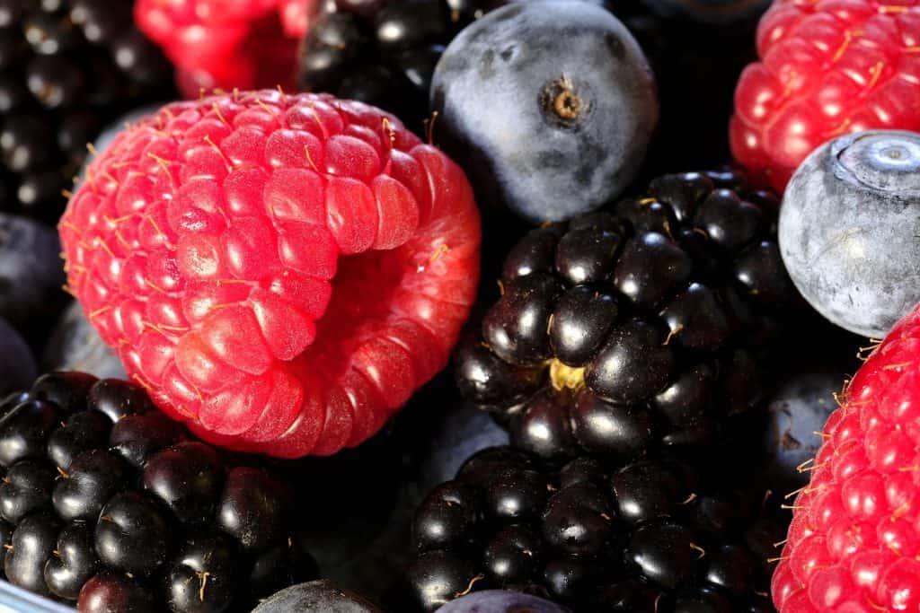 frutos del bosque patagonia