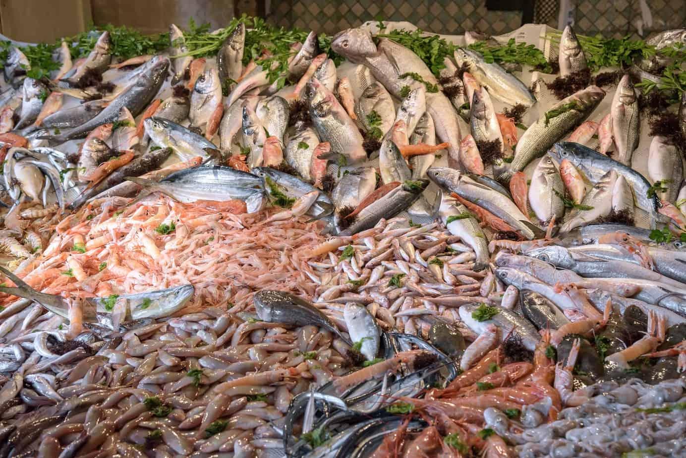salmón para preparar sushi