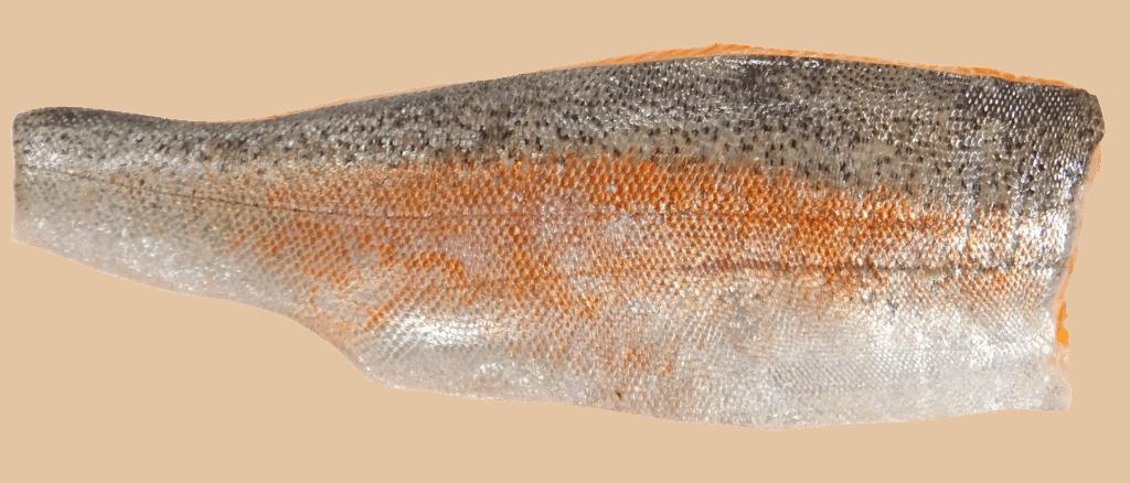 Trucha patagónica